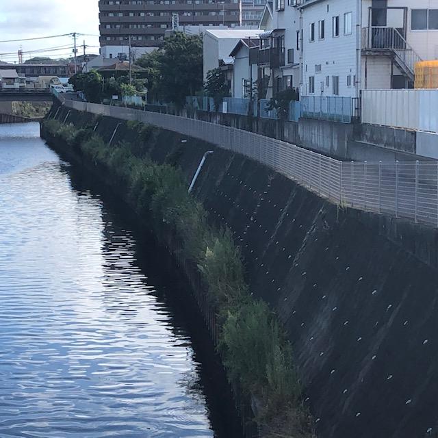 河川の高水敷にiPhoneを落とした場合