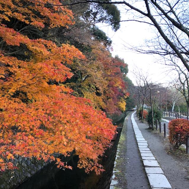 鎌倉で奇麗な紅葉が見たい!|葉が色づく仕組みとは?